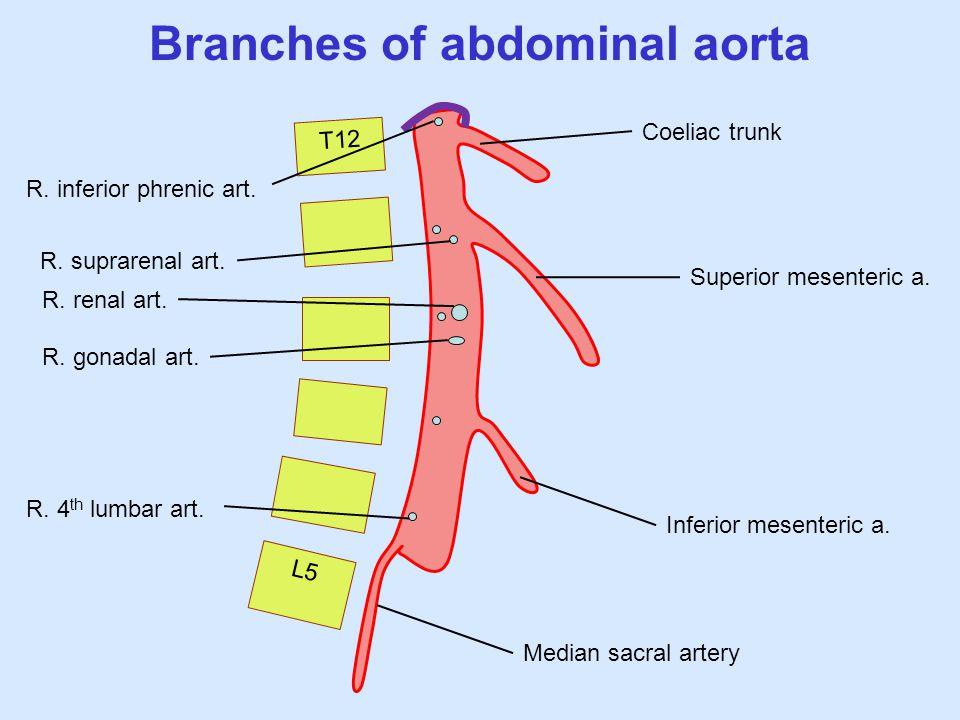 L5 T12 Branches of abdominal aorta Coeliac trunk Superior mesenteric a. Inferior mesenteric a. Median sacral artery R. inferior phrenic art. R. 4 th l