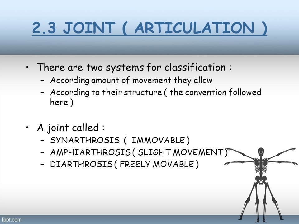 2.3 JOINT ( ARTICULATION ) There are two systems for classification : –According amount of movement they allow –According to their structure ( the con