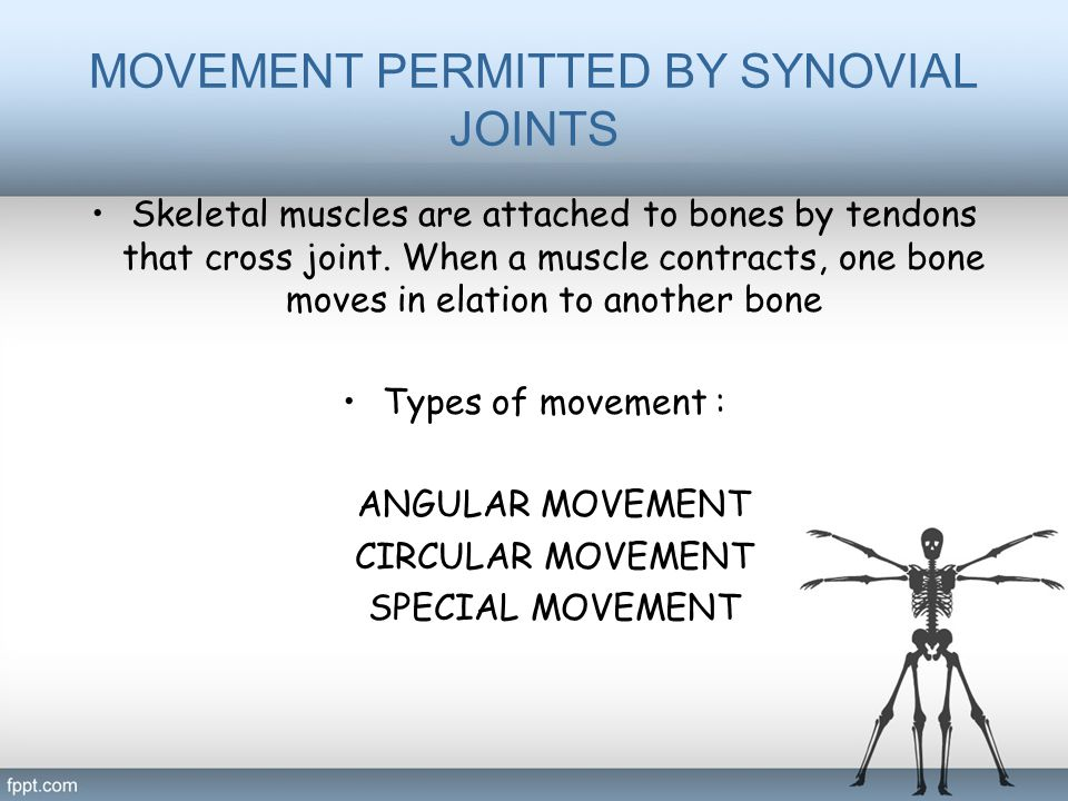 MOVEMENT PERMITTED BY SYNOVIAL JOINTS Skeletal muscles are attached to bones by tendons that cross joint. When a muscle contracts, one bone moves in e