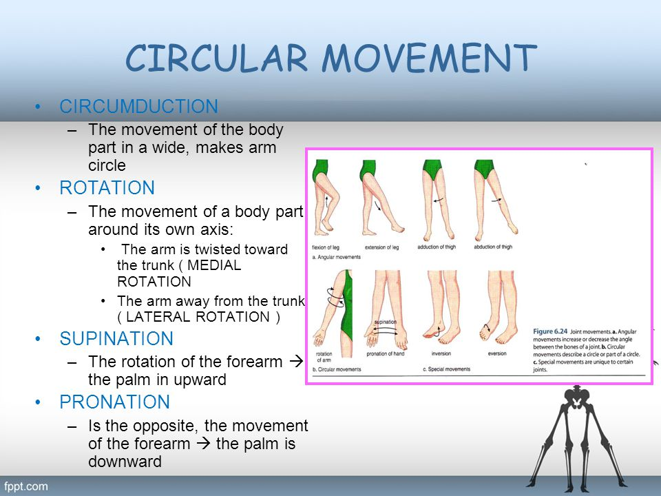 CIRCULAR MOVEMENT CIRCUMDUCTION –The movement of the body part in a wide, makes arm circle ROTATION –The movement of a body part around its own axis: