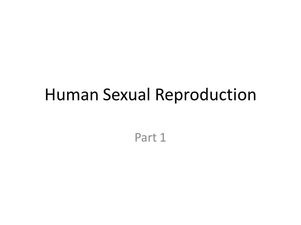 Human Sexual Reproduction Part 1