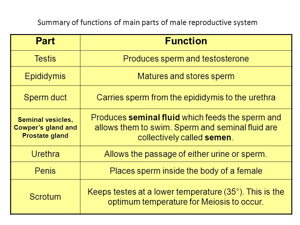 Difference between asexual and sexual reproduction quizlet biology