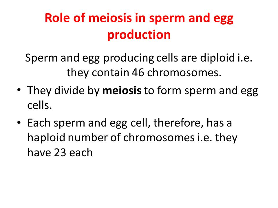 Role of meiosis in sperm and egg production Sperm and egg producing cells are diploid i.e. they contain 46 chromosomes. They divide by meiosis to form