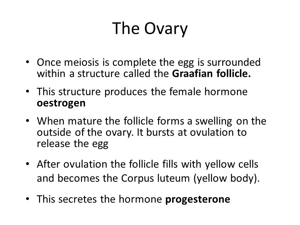 The Ovary Once meiosis is complete the egg is surrounded within a structure called the Graafian follicle. This structure produces the female hormone o