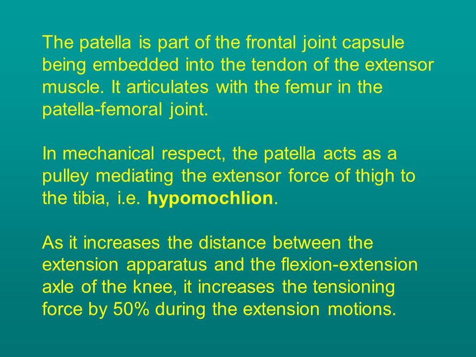 The patella is part of the frontal joint capsule being embedded into the tendon of the extensor muscle. It articulates with the femur in the patella-f