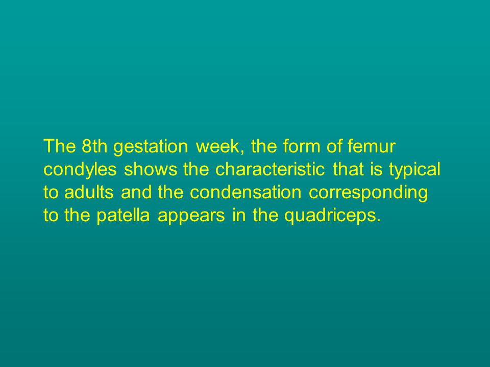 The 8th gestation week, the form of femur condyles shows the characteristic that is typical to adults and the condensation corresponding to the patell