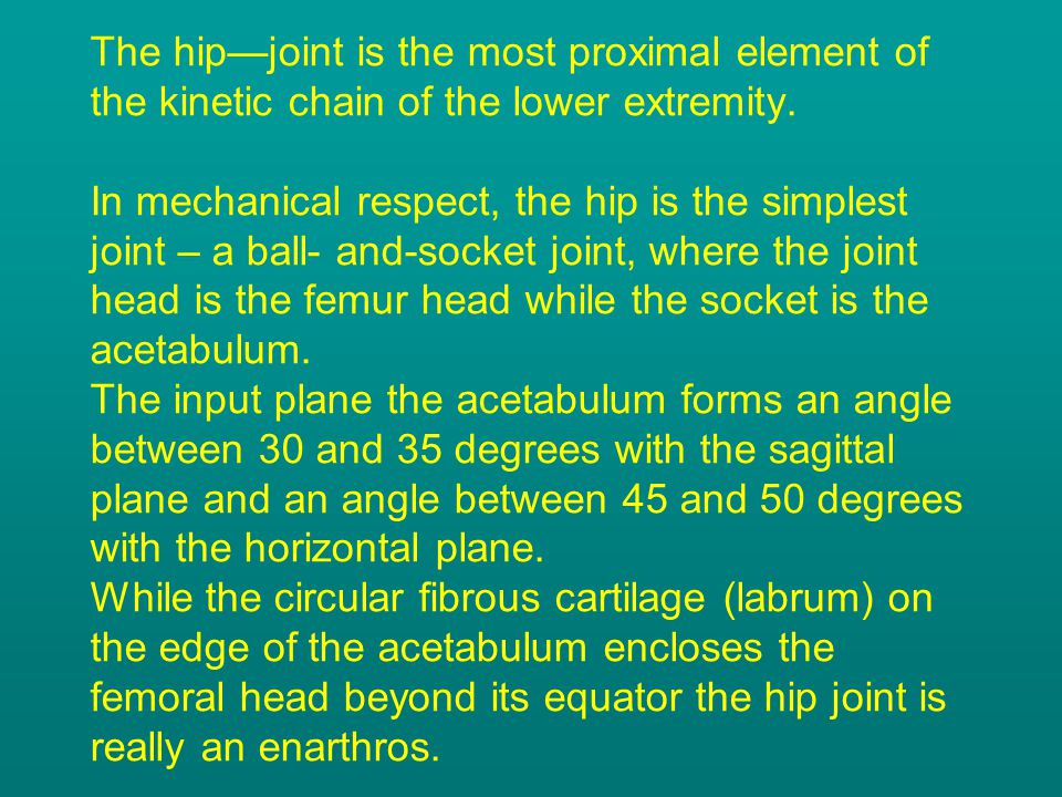 The hip—joint is the most proximal element of the kinetic chain of the lower extremity. In mechanical respect, the hip is the simplest joint – a ball-