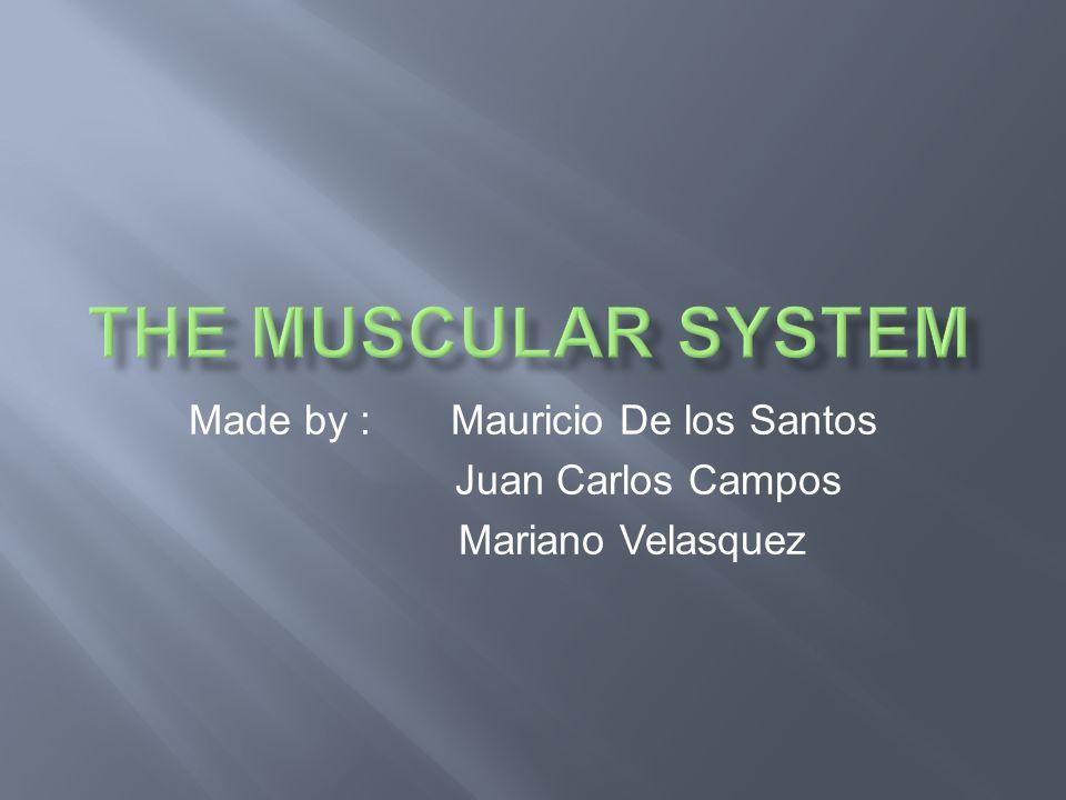 Made by : Mauricio De los Santos Juan Carlos Campos Mariano Velasquez