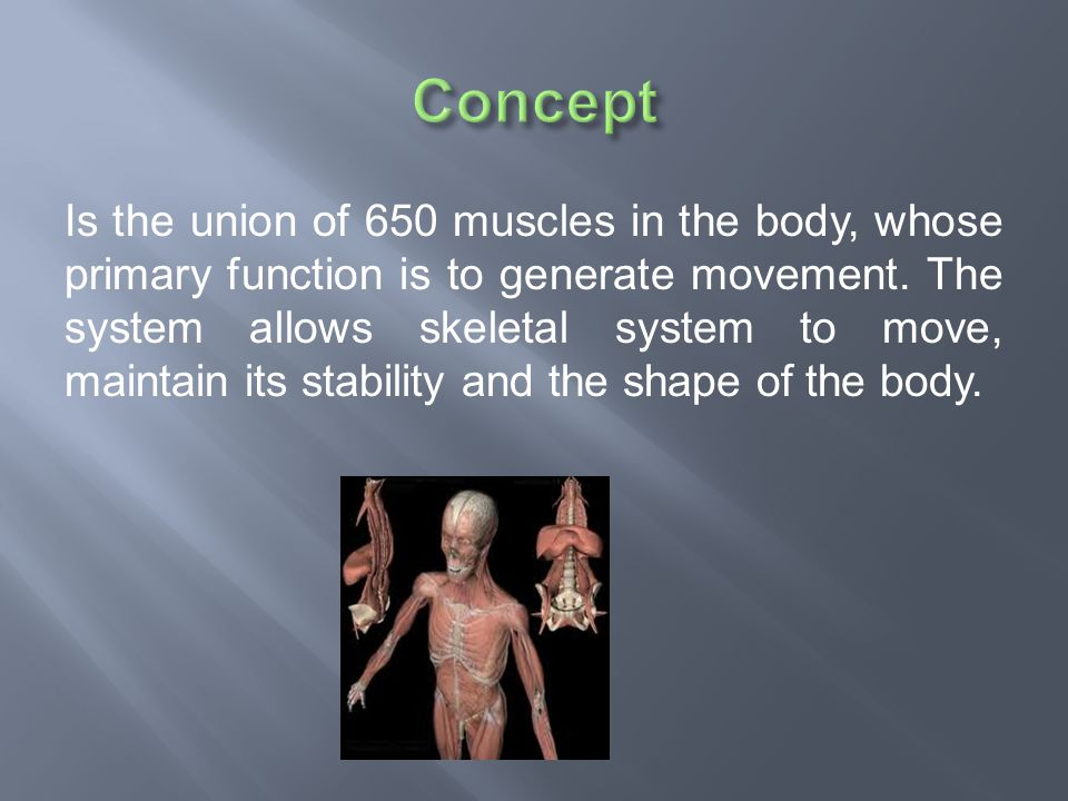  A pulled muscle: or muscle strain is a partial or complete rupture of muscle fibers made it by a strong impact.