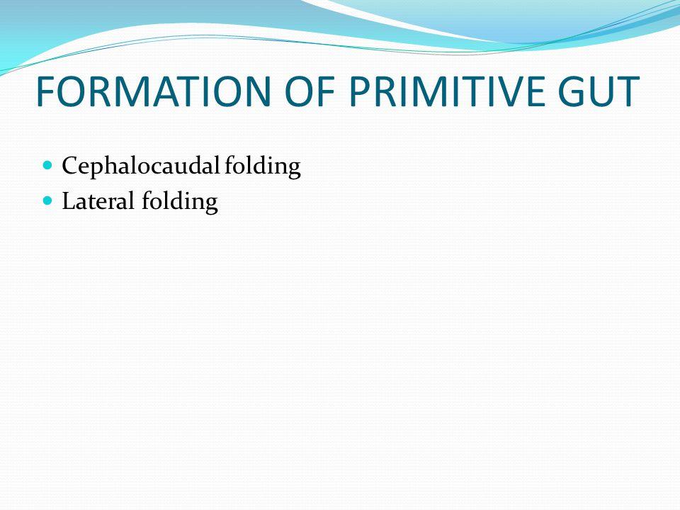 FORMATION OF PRIMITIVE GUT Cephalocaudal folding Lateral folding