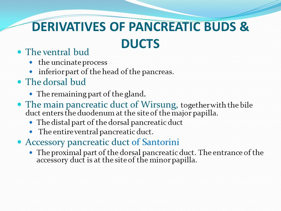 DERIVATIVES OF PANCREATIC BUDS & DUCTS The ventral bud the uncinate process inferior part of the head of the pancreas. The dorsal bud The remaining pa