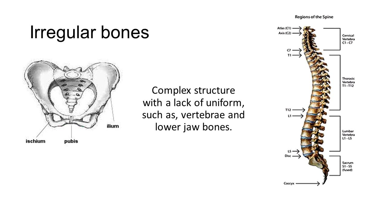 Flat bones Flat bones or Membranous bones – These bones are shaped like a curved board and build a cavity to protect organs inside.