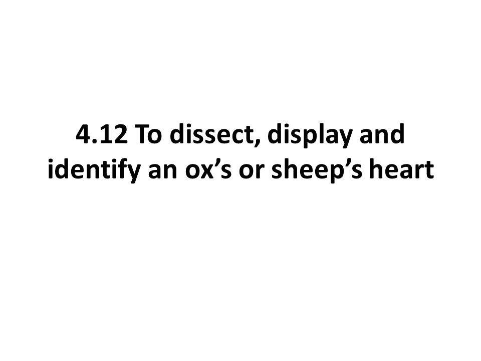 4.12 To dissect, display and identify an ox's or sheep's heart