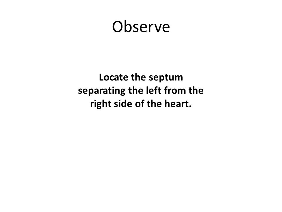 Observe Locate the septum separating the left from the right side of the heart.
