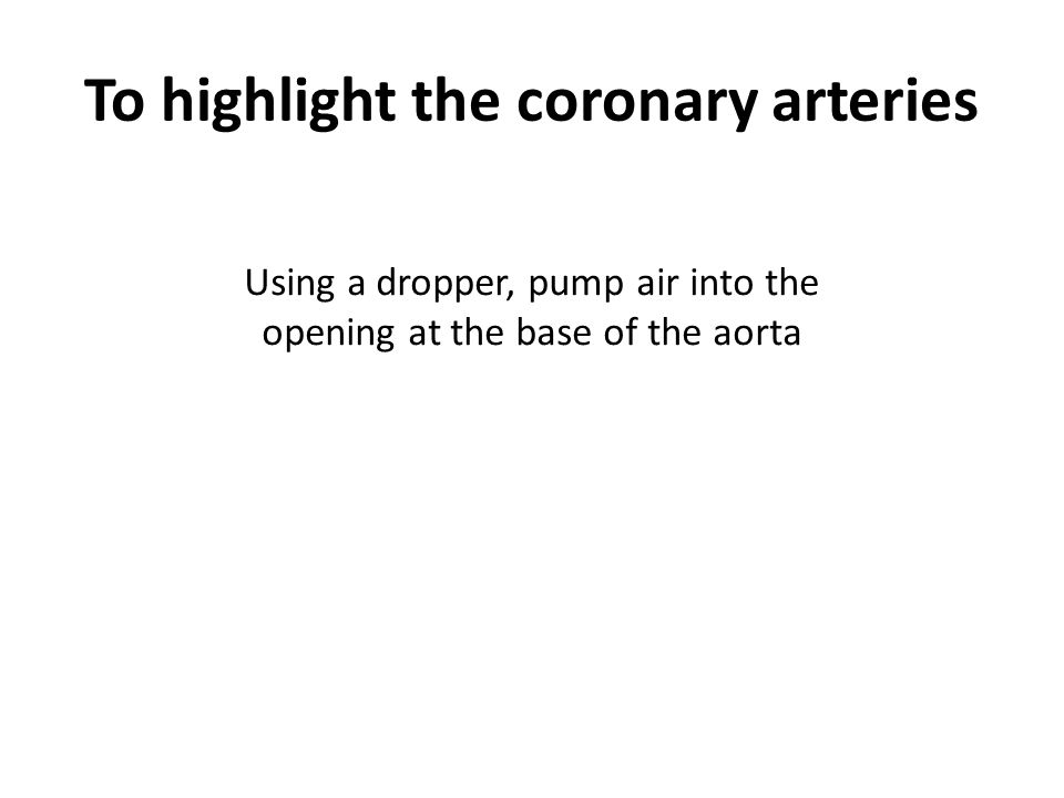 To highlight the coronary arteries Using a dropper, pump air into the opening at the base of the aorta