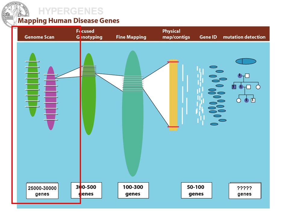 HYPERGENES 25000-30000 genes genes