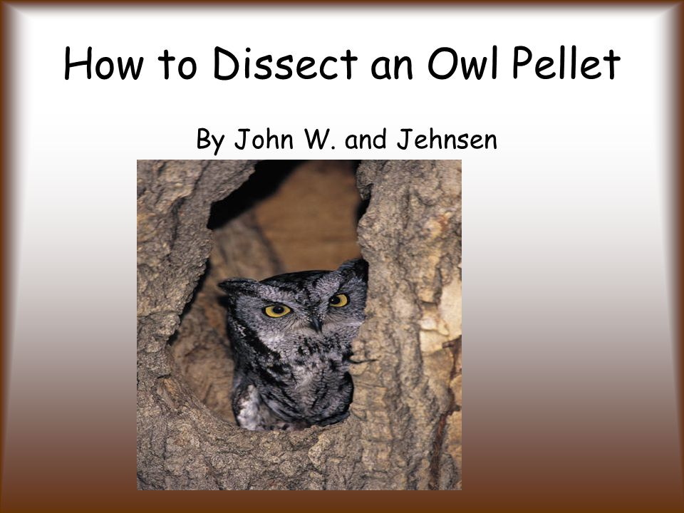 How to Dissect an Owl Pellet By John W. and Jehnsen