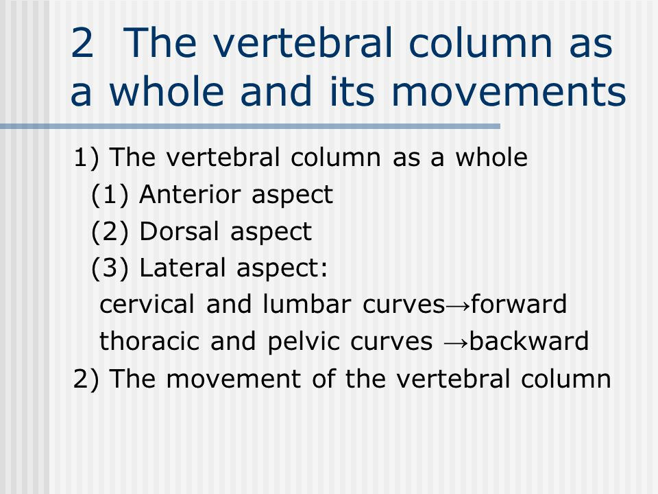 2 The vertebral column as a whole and its movements 1) The vertebral column as a whole (1) Anterior aspect (2) Dorsal aspect (3) Lateral aspect: cervical and lumbar curves → forward thoracic and pelvic curves → backward 2) The movement of the vertebral column