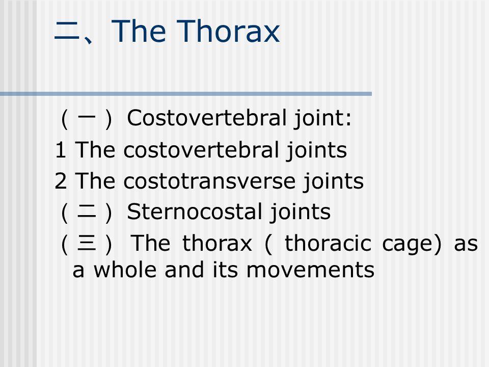 二、 The Thorax (一) Costovertebral joint: 1 The costovertebral joints 2 The costotransverse joints (二) Sternocostal joints (三) The thorax ( thoracic cage) as a whole and its movements