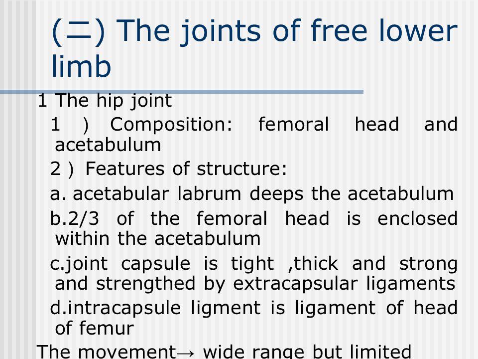 ( 二 ) The joints of free lower limb 1 The hip joint 1 ) Composition: femoral head and acetabulum 2 ) Features of structure: a.