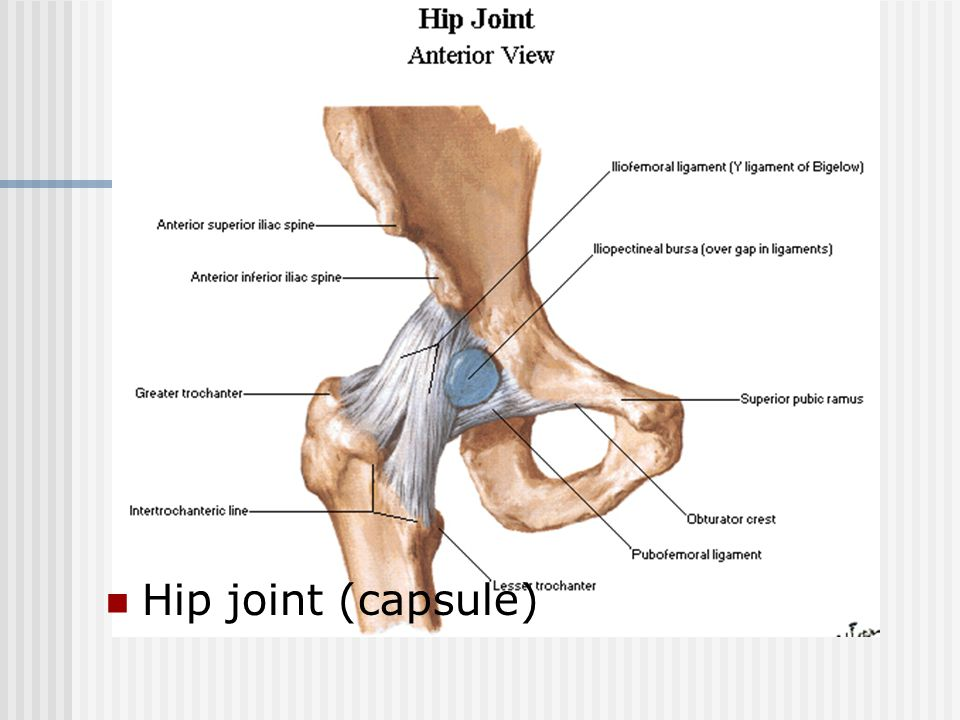 Hip joint (capsule)