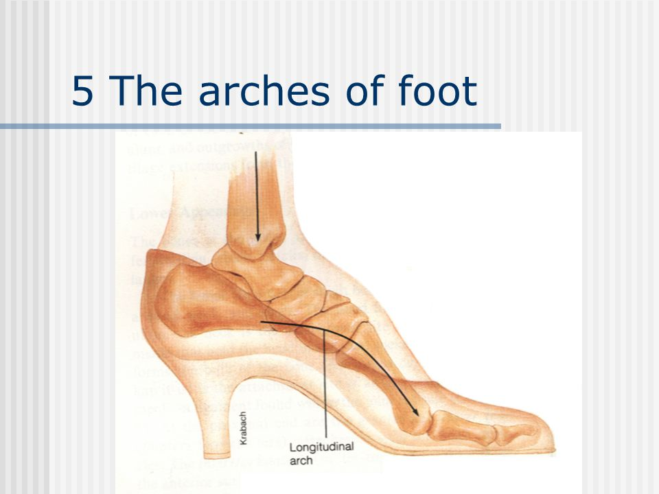 5 The arches of foot