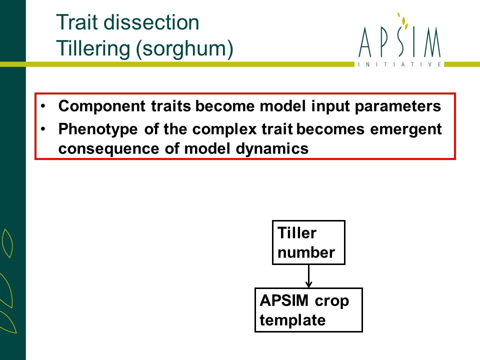 Trait dissection Tillering (sorghum) Component traits become model input parameters Phenotype of the complex trait becomes emergent consequence of model dynamics APSIM crop template Tiller number