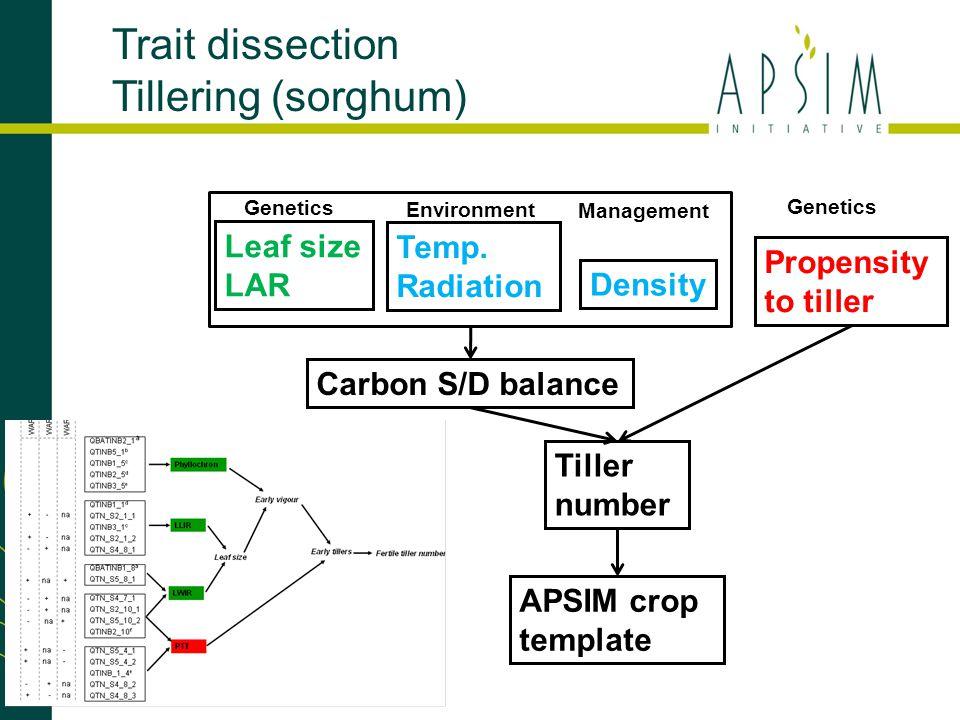 Trait dissection Tillering (sorghum) APSIM crop template Tiller number Propensity to tiller Temp. Radiation Environment Genetics Leaf size LAR Genetic