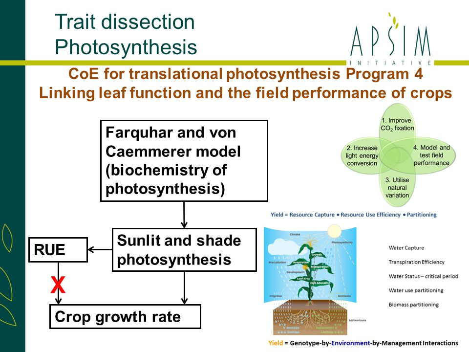 Sunlit and shade photosynthesis Crop growth rate Farquhar and von Caemmerer model (biochemistry of photosynthesis) Trait dissection Photosynthesis CoE for translational photosynthesis Program 4 Linking leaf function and the field performance of crops RUE X