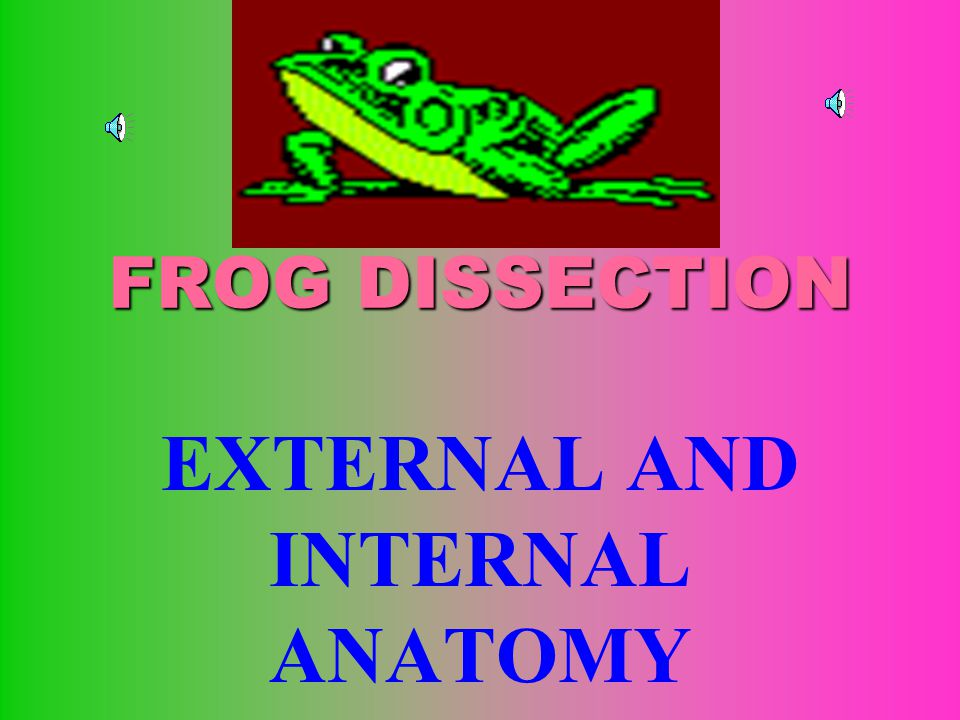 FROG DISSECTION EXTERNAL AND INTERNAL ANATOMY