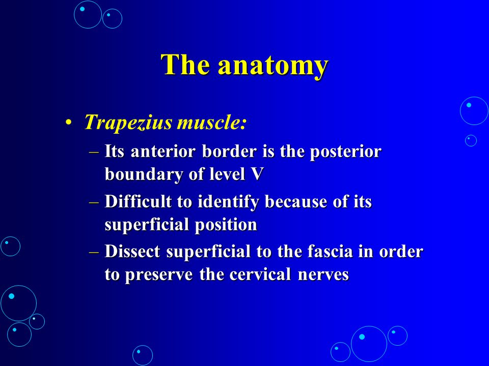 The anatomy Trapezius muscle: –Its anterior border is the posterior boundary of level V –Difficult to identify because of its superficial position –Di