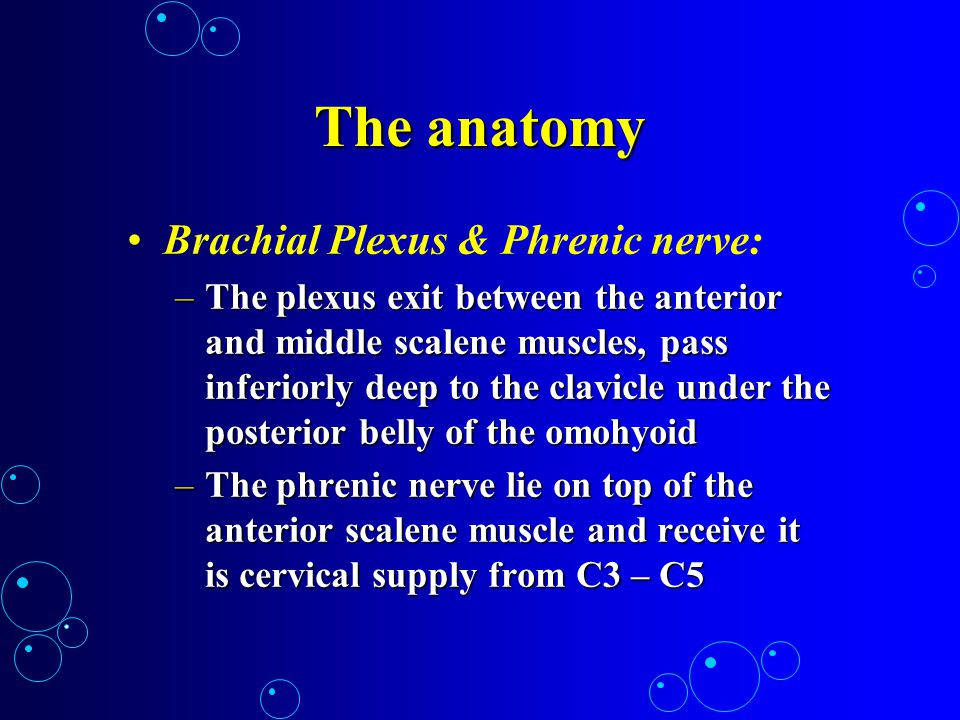 The anatomy Brachial Plexus & Phrenic nerve: –The plexus exit between the anterior and middle scalene muscles, pass inferiorly deep to the clavicle un