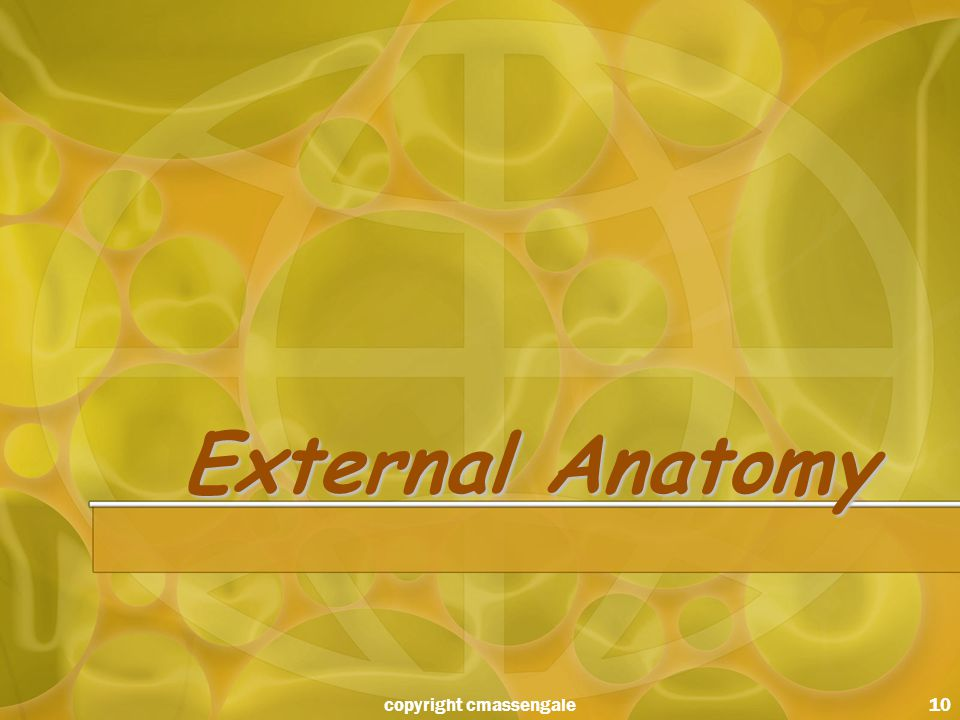 10 External Anatomy copyright cmassengale