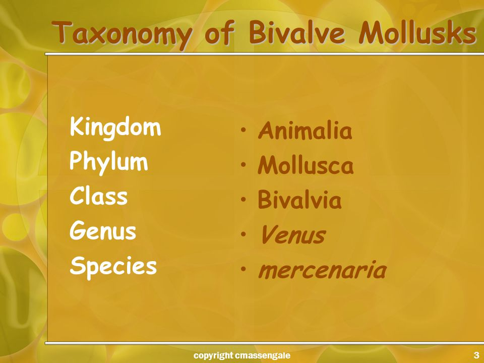 3 Taxonomy of Bivalve Mollusks Kingdom Phylum Class Genus Species Animalia Mollusca Bivalvia Venus mercenaria copyright cmassengale
