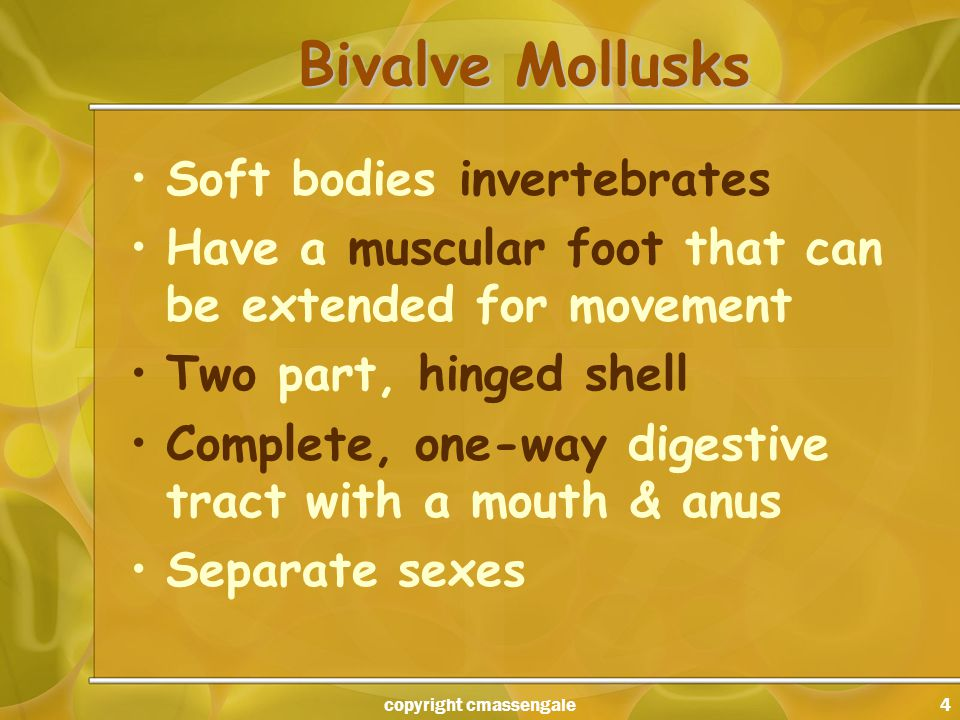 4 Bivalve Mollusks Soft bodies invertebrates Have a muscular foot that can be extended for movement Two part, hinged shell Complete, one-way digestive tract with a mouth & anus Separate sexes copyright cmassengale