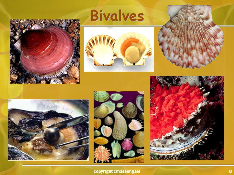 8 Bivalves