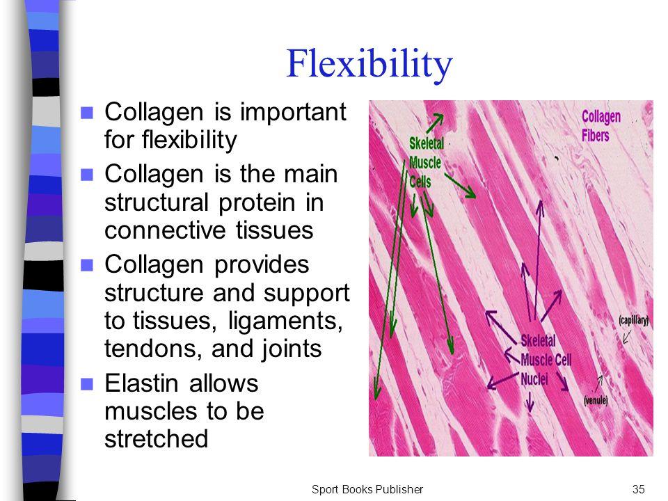 Sport Books Publisher35 Flexibility Collagen is important for flexibility Collagen is the main structural protein in connective tissues Collagen provi