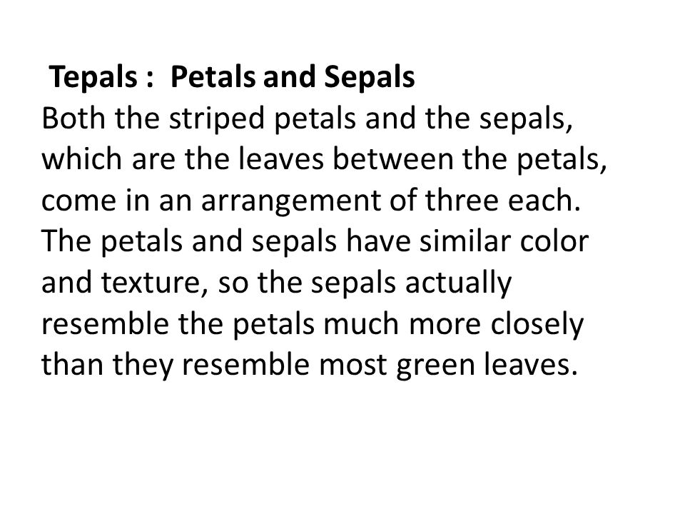 Tepals : Petals and Sepals Both the striped petals and the sepals, which are the leaves between the petals, come in an arrangement of three each. The