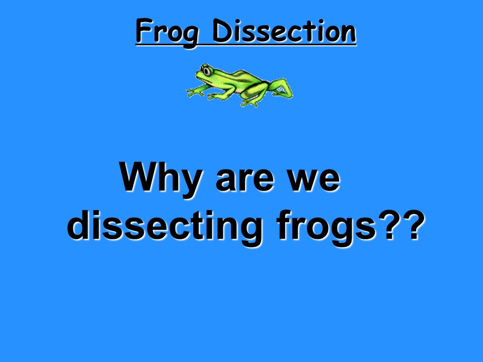 Frog Dissection Why are we dissecting frogs?? dissecting frogs??