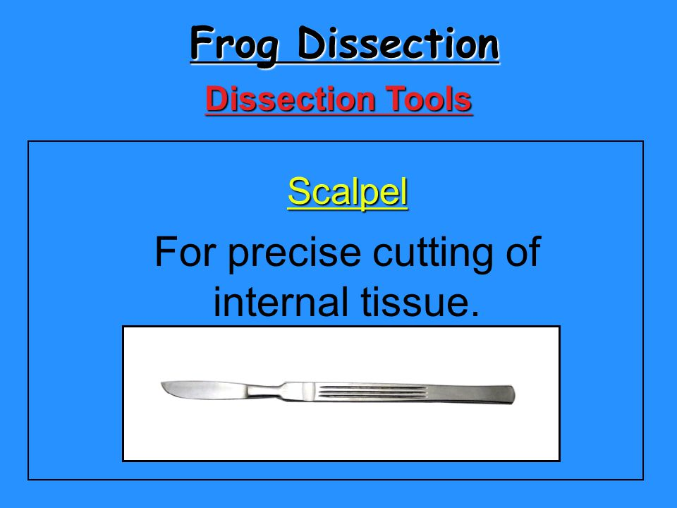 Frog Dissection Scalpel For precise cutting of internal tissue. Dissection Tools