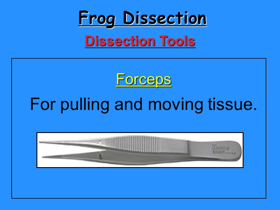 Frog Dissection Forceps For pulling and moving tissue. Dissection Tools