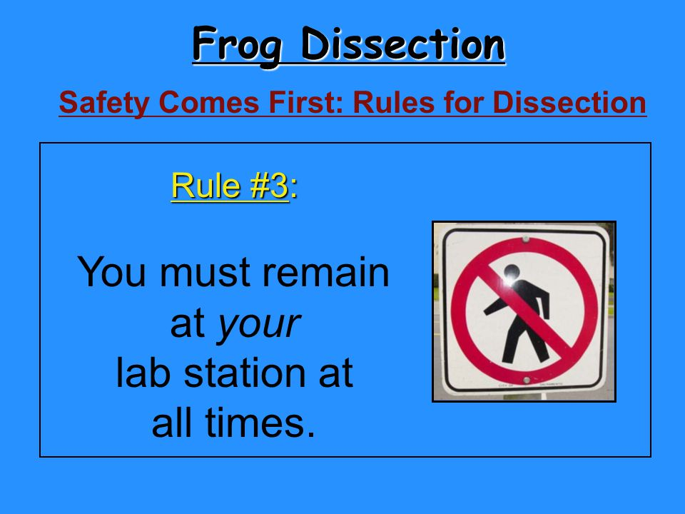 Frog Dissection Safety Comes First: Rules for Dissection Rule #3: You must remain at your lab station at all times.