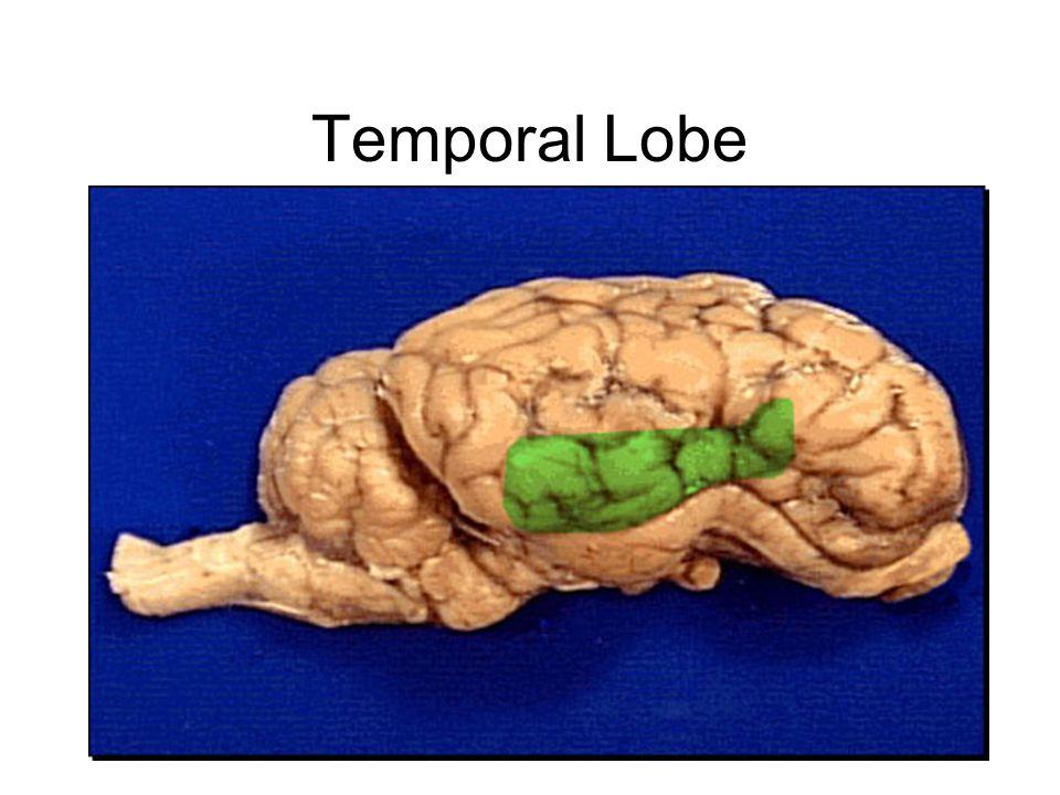 red pin = corpus callosum blue pin = thalamus green pin = cerebellum