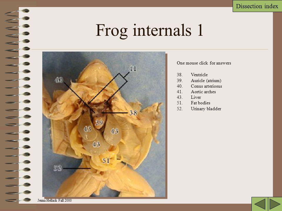 Jenna Hellack Fall 2000 Dissection index Frog mouth 30. Maxillary teeth 31. Vomerine teeth 33. Eustachian tubes 34.Tongue 35.Glottis 36.Esophagus Mous