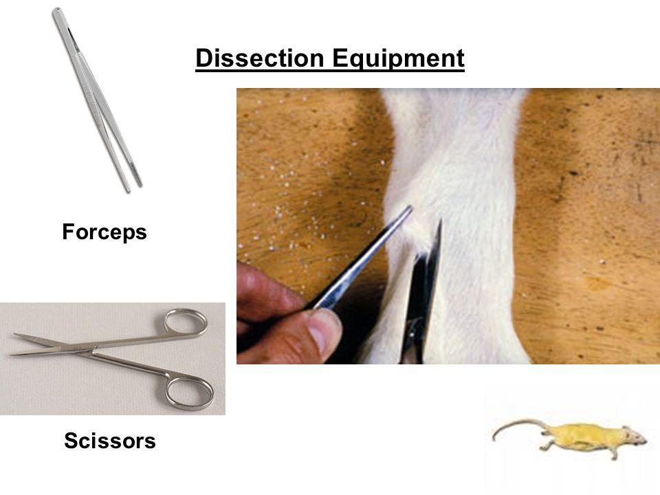 Dissection Equipment Forceps Scissors