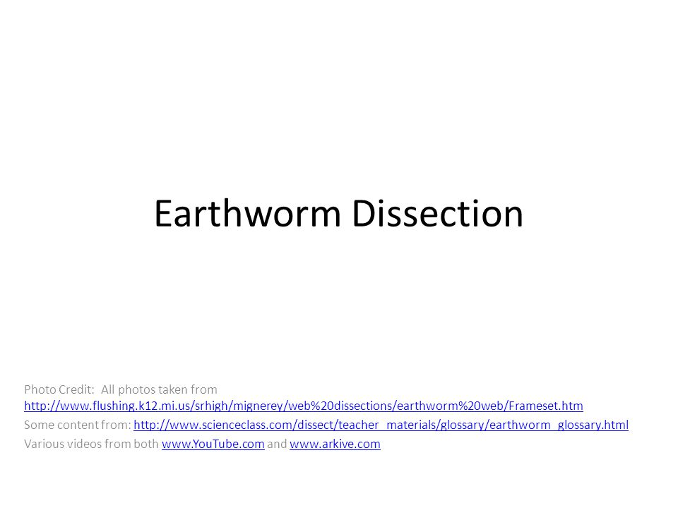 Digestive System Food goes from the: Mouth Pharynx Esophagus Crop Gizzard Intestine Anus