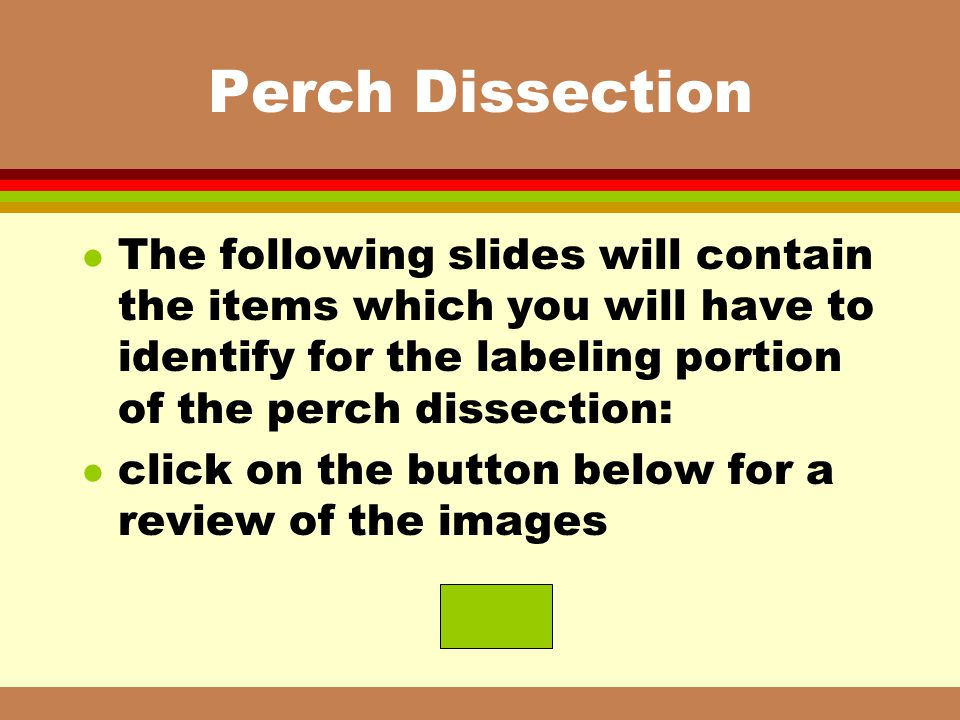Perch Dissection l The following slides will contain the items which you will have to identify for the labeling portion of the perch dissection: l cli