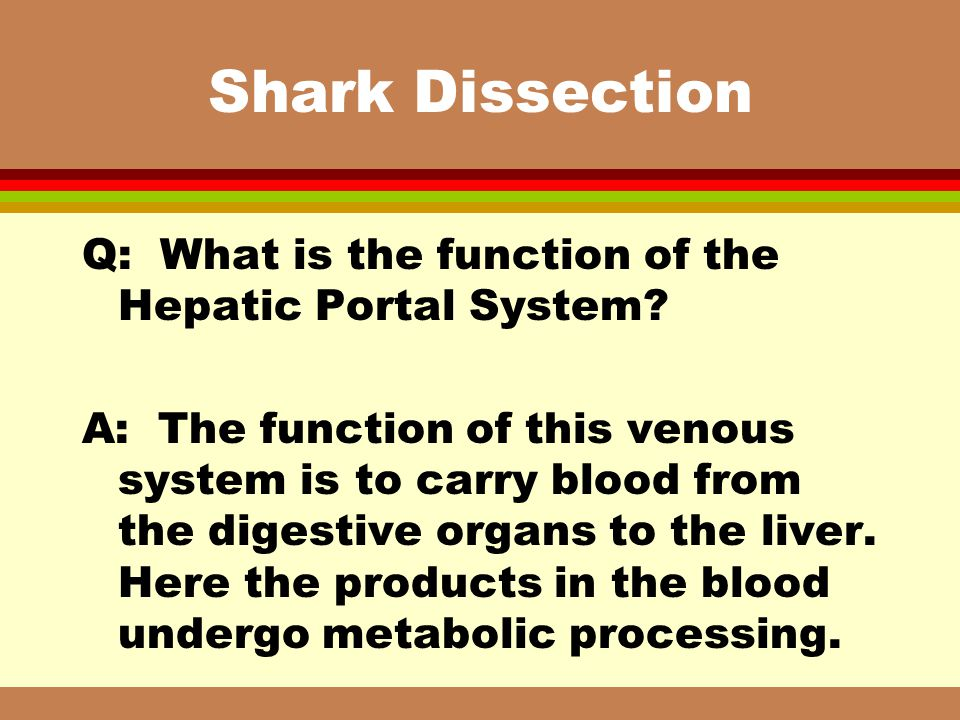 Shark Dissection Q: What is the function of the Hepatic Portal System? A: The function of this venous system is to carry blood from the digestive orga