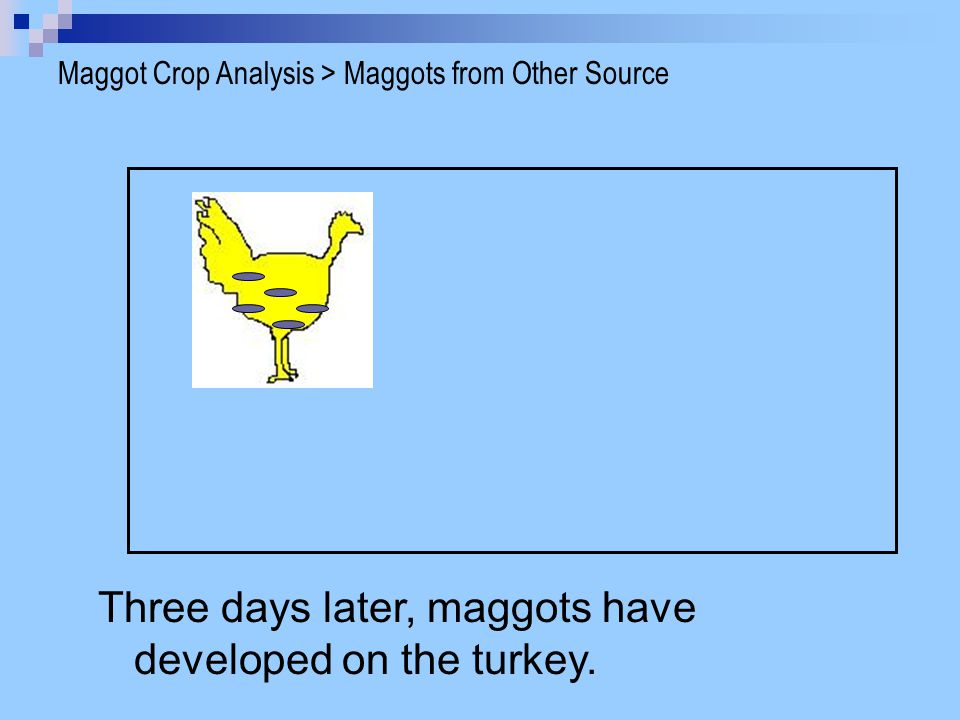 Three days later, maggots have developed on the turkey.