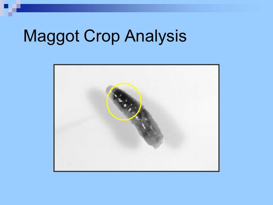 Maggot Crop Analysis